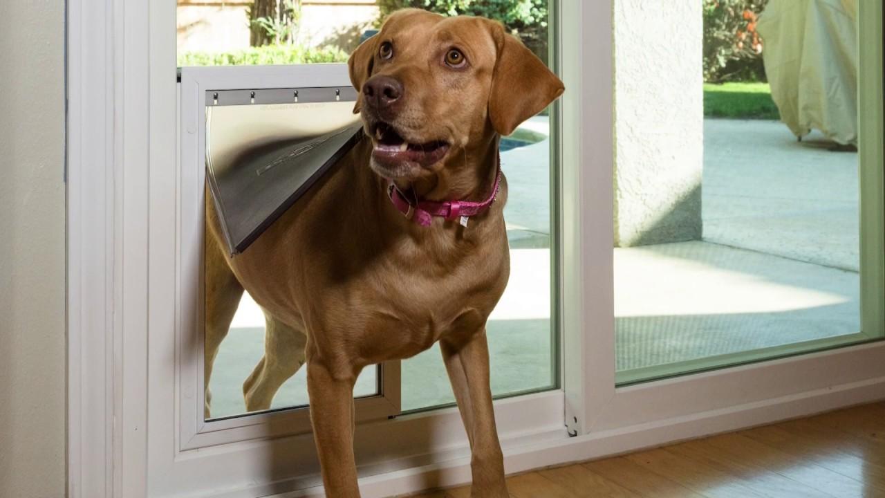 All American windows Doors Patio pet doors